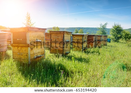 Hives in an apiary with bees flying to the landing boards. Apiculture #653194420