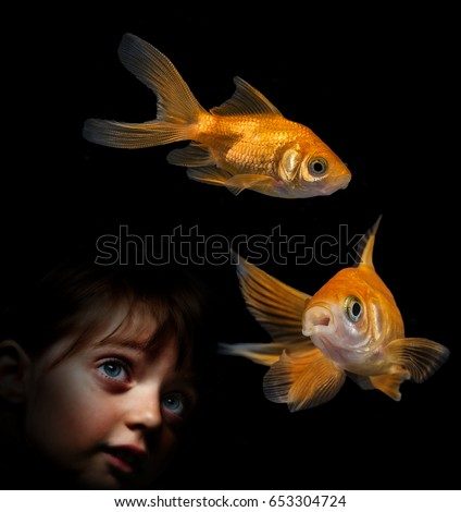 little girl behind aquarium looking on golden fish