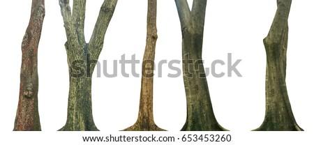 Set of tree trunk isolated on white background Royalty-Free Stock Photo #653453260