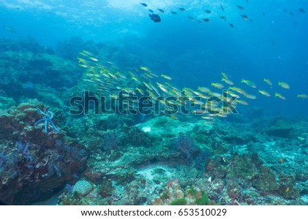 Underwater blue ocean background  #653510029