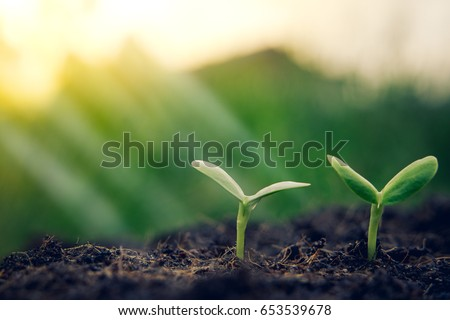 Young plants begin small growing in soil ecology earth new world from seed saving protection of tree spring summer care and nature sun light to leaf background. #653539678