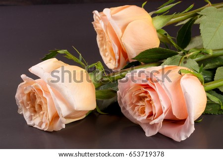 three fresh beige roses on a dark wooden background #653719378