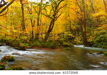 Autumn Colors of Oirase River, located at Aomori Prefecture Japan #65372068