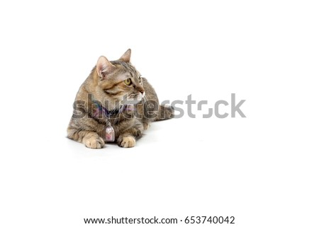The tabby cat on the white background. #653740042