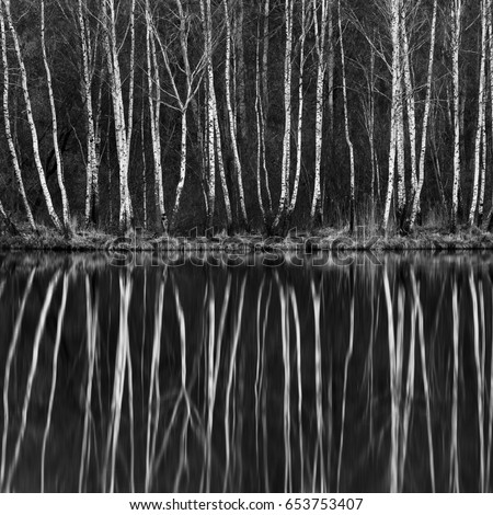 Black and white birch tree forest water reflection