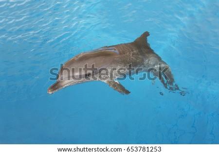 dolphin #653781253