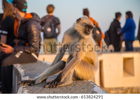 A monkey among people #653824291