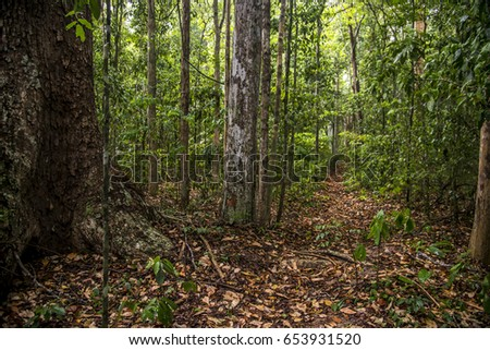Forest Landscape photographed  in Sooretama/Linhares, Espí­rito Santo - Southeast of Brazil. Atlantic Forest Biome. #653931520