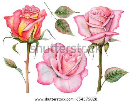 Watercolor set of roses, hand drawn illustration of flowers and leaves, floral elements for design isolated on white background.