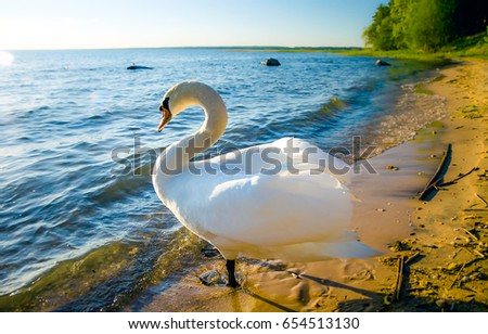 White swan on beach #654513130