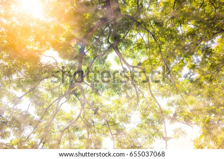 Beautiful and refreshing. Sun and fog in the morning. On a tree with birds perched.? #655037068