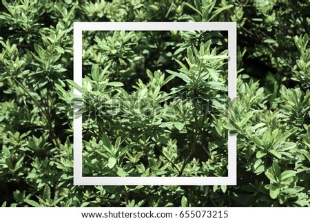 Creative layout is made of leaves with a note frame. #655073215