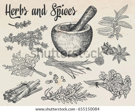 Beautiful hand drawing healthy herbs and spices mortar. Herbs, basil, chervil. #655150084