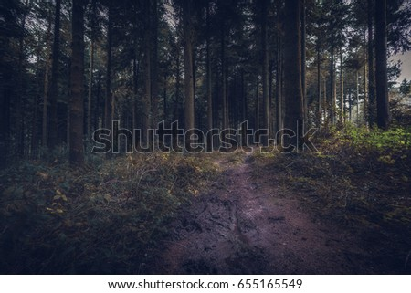 idless woods dark and mysterious near trio in cornwall england uk. #655165549