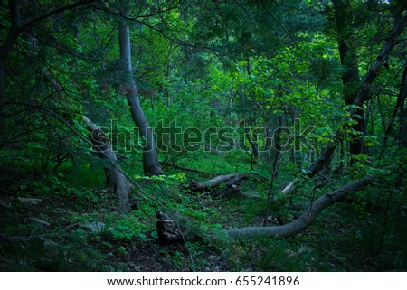 Shrouded Clearing in Forest #655241896