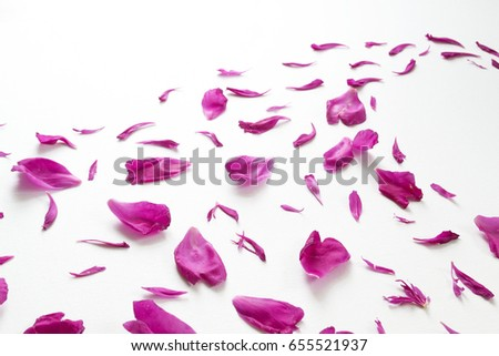 Peony petals isolated on white background. Romantic design. #655521937