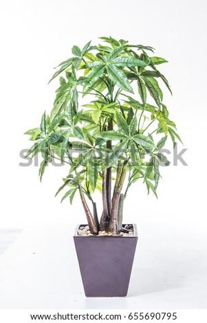 plant #655690795