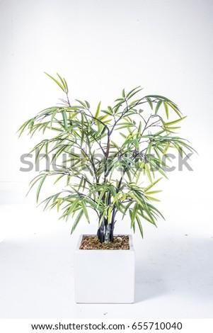 plant #655710040