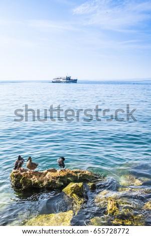 Wild duck during rest. Lake Garda, Italy #655728772