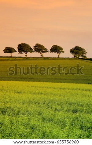 Agricultural landscape with row of trees on the horizon #655756960