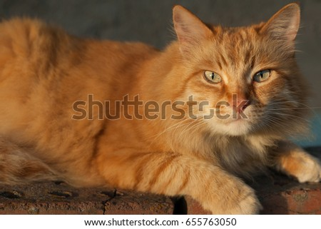 Close-up. Photo of red-headed cat with green eyes looking straight towards camera.