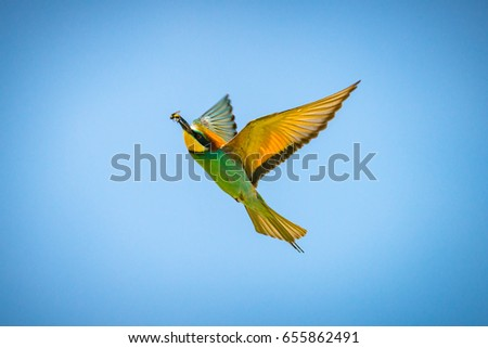 Bee eaters in flight during bird watching somewhere in southern Romania #655862491