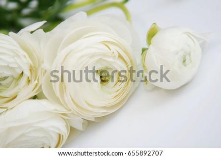 White ranunculus walpaper background #655892707