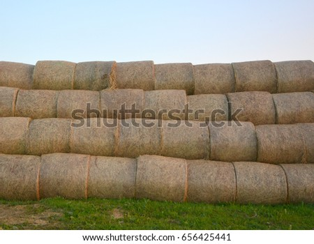 Hay bale. Agriculture field with sky. Rural nature in the farm land. Straw on the meadow. Wheat yellow golden harvest in summer. Countryside natural landscape. Grain crop, harvesting. #656425441