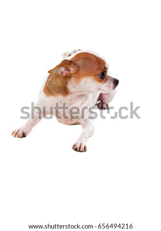 Small dog isolated on a white background #656494216