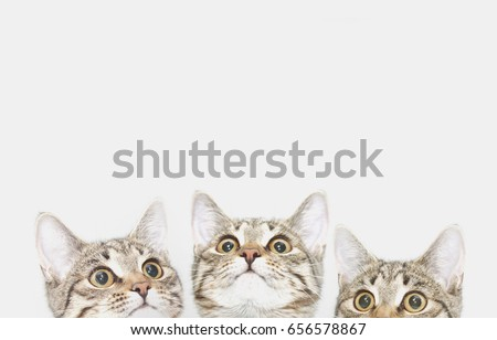 Three cute kittens are waiting to be fed (or likes). Curious cats faces looking up Royalty-Free Stock Photo #656578867