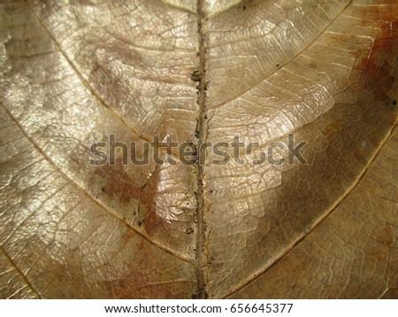 Close up Leaf Texture #656645377