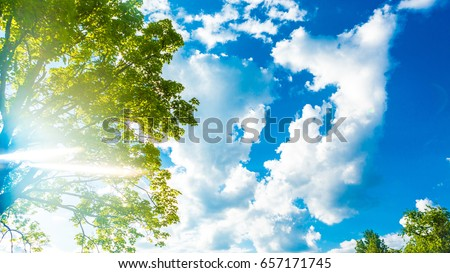 Background sunny day sky with white clouds and green tree leaves branch. #657171745