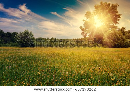 Summer landscape with a blooming field and beautiful sky #657198262