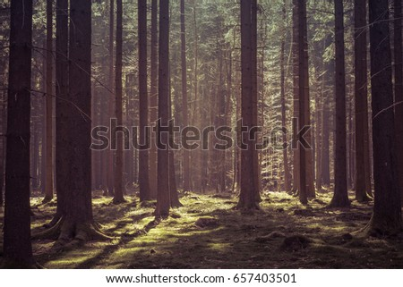 Magical morning sunlight in a deep forest in Baden-Wurttemberg, Germany. #657403501