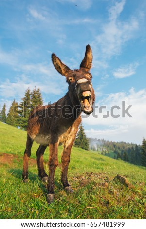 Picture of a funny donkey at sunset in Transylvania.