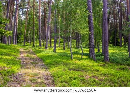Forest full of berries #657661504