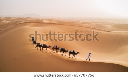 Tuareg with camels walk thru the desert on the western part of The Sahara Desert in Morocco. The Sahara Desert is the world's largest hot desert.