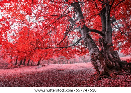 mystery romantic red forest with colorful trees and sunlight. autumn natural background. toned picture