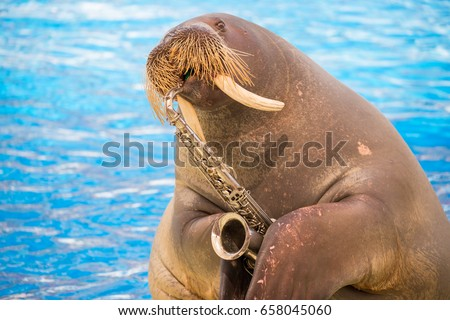Walrus plaing on the trumpet #658045060