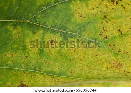 Plant diseases #658058944