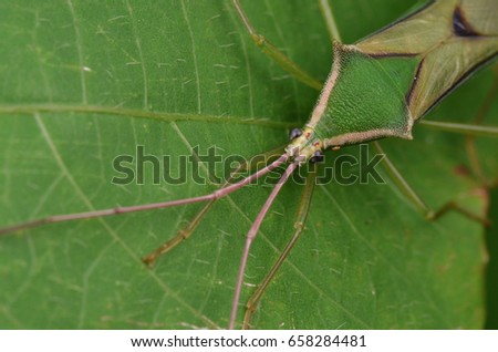 macro image of a green paddy bug #658284481