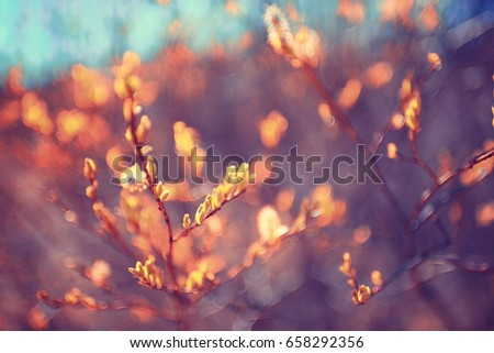 toned background spring tree branches with young leaves sun glare blur bokeh #658292356