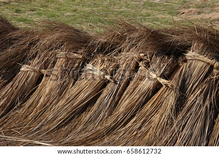 Bundles harvested reed are drying #658612732