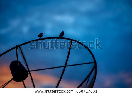 Two sparrows on satellite dish. #658717831