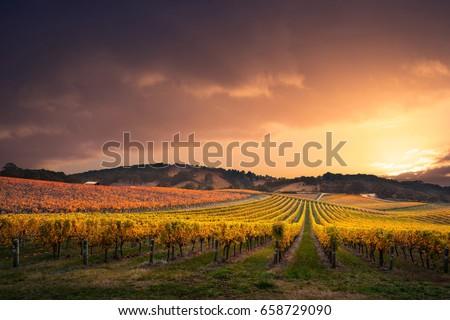 Gorgeous Sunset over a South Australian vineyard #658729090