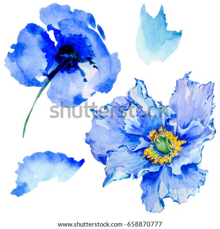Wildflower poppy flower in a watercolor style isolated. Full name of the plant: poppy, papaver,  opium. Aquarelle wild flower for background, texture, wrapper pattern, frame or border. #658870777