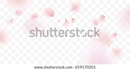 Pink sakura falling petals vector background. 3D romantic illustration Royalty-Free Stock Photo #659170201
