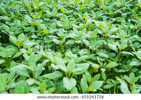Many small plants with leaves #659241736
