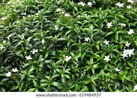 Flower #659484937
