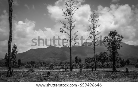tree trunk black and white dry nature background #659496646